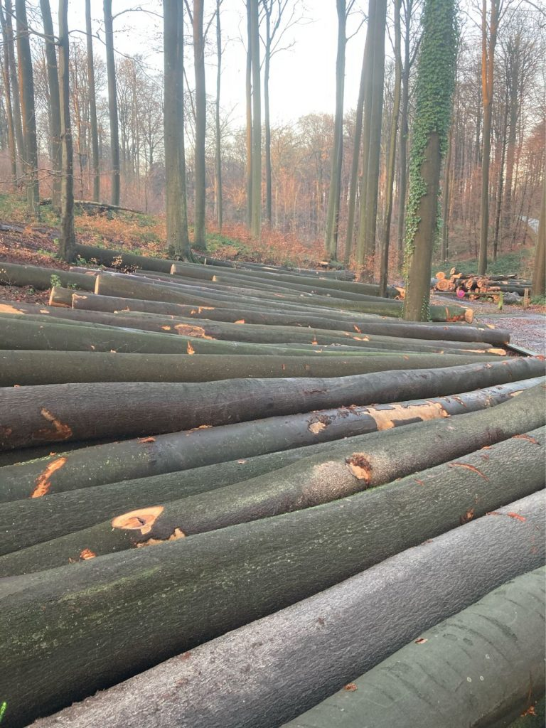beech log price 1 768x1024 - BEECH LUMBER PRICES