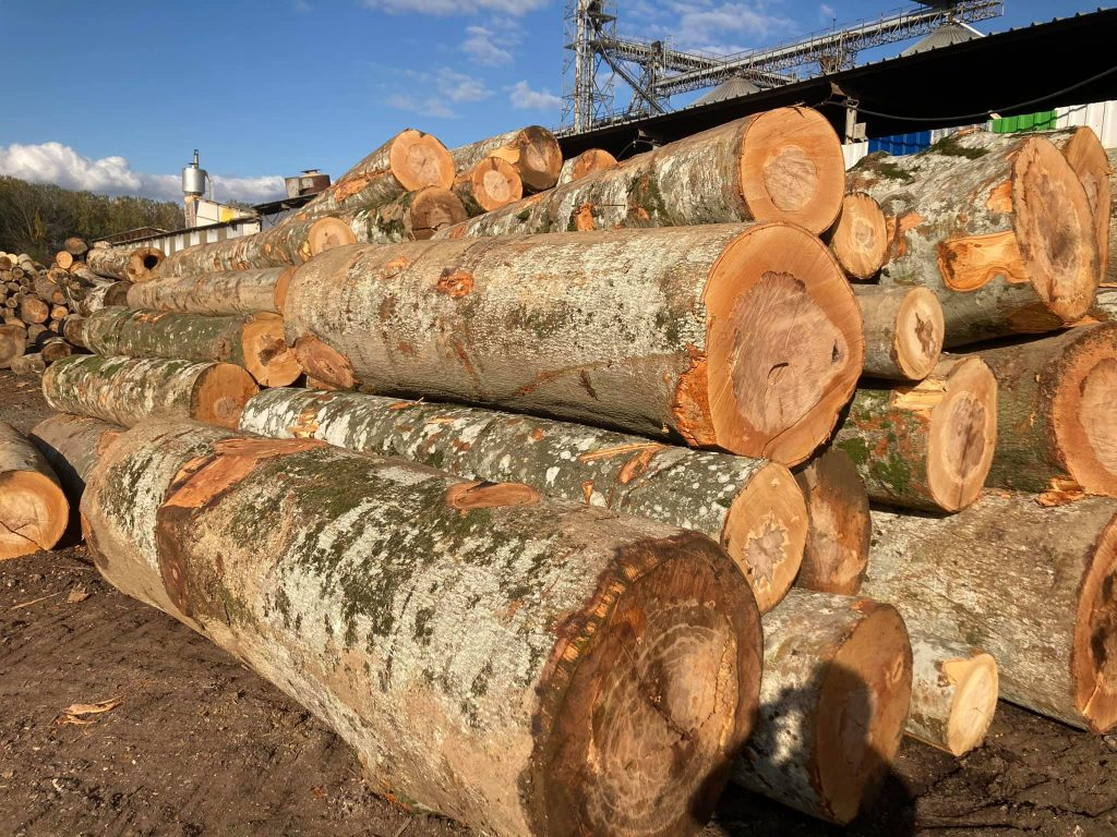 beech logs price 2 1024x768 - BEECH LUMBER PRICES